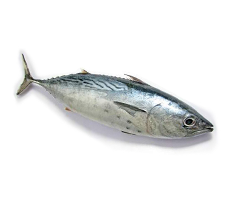Buy fish online buy fresh fish online kochi for Order fish online