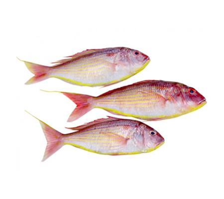 Buy fish online buy fresh fish online kochi for Fresh fish online